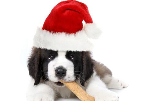Keep Your Dog Safe This Christmas