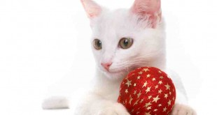 cat-with-red-ball