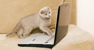 cat using twitter