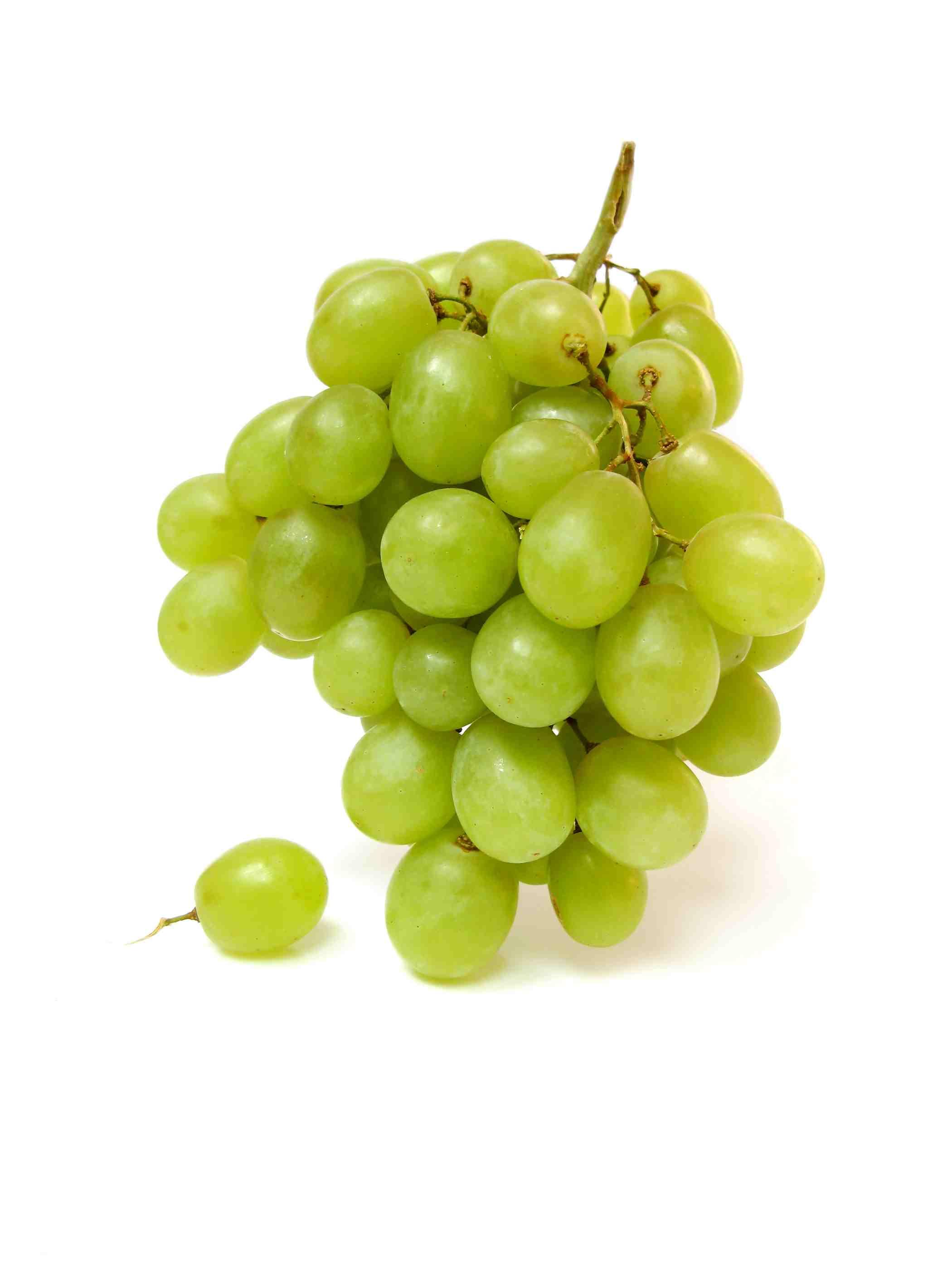 grapes raisin pet dog poison