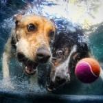 underwater-dog-photography
