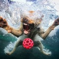 underwater-dog-photography4
