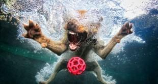 underwater-dog-photography4