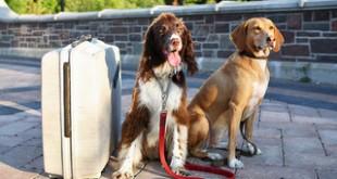 dog emergency kit