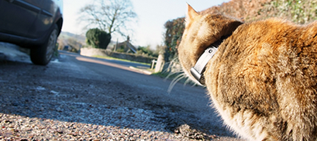 gps collar pawtrack track