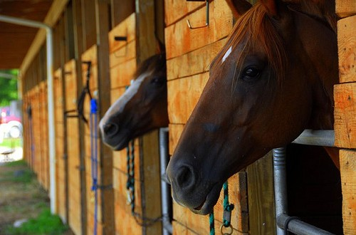 Picking the Right Stables for You and your Horse