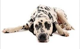 arthritis-in-dogs