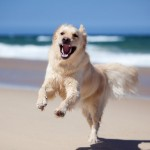 12 best supplements for a healthy dog