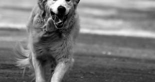 pexion canine epilepsy