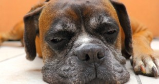 lethargic dog canine gastritis