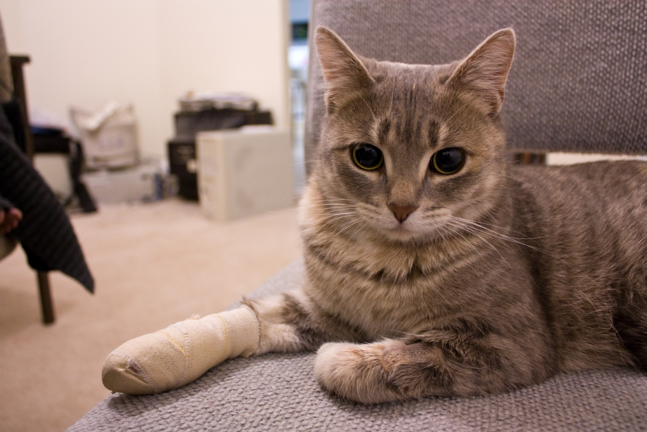 symptoms of heartworms in cats