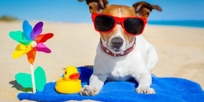 Can Dogs Get Sunburn Uk