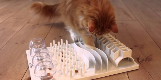 Food Enrichment For Cats