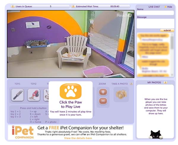 iPet Companion Cats