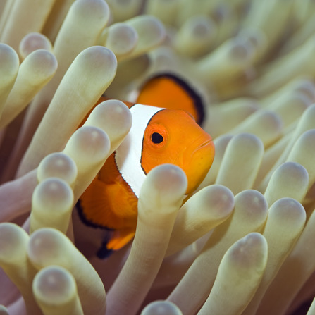 Do fish feel pain petsci for Do fish feel pain