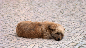 urinary problems for pets