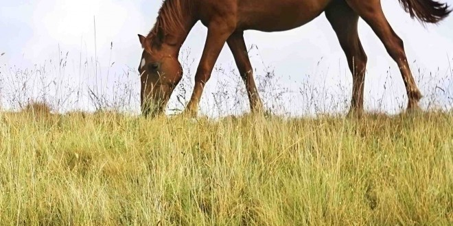 A Guide to Poisoning in Horses: The Dangers of Biological