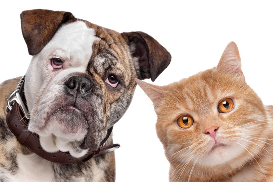 photodune 1608469 a dog and a cat xs jpg