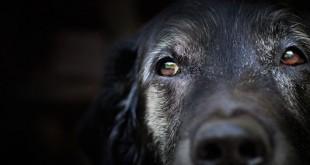 canine epilepsy and seizures