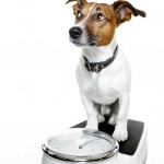 photodune-1747015-weight-watcher-dog-s