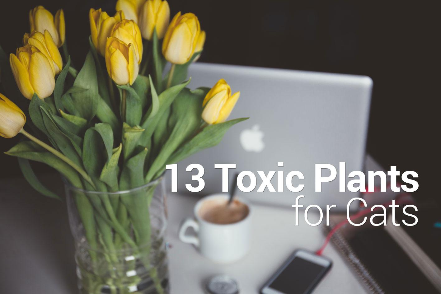 13 popular but toxic plants for cats izmirmasajfo