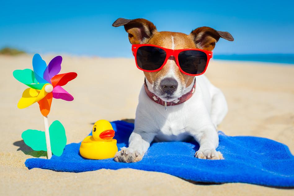 Can A Dog Get Sunburn