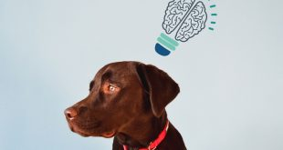 dog-brain-intelligence