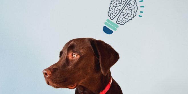dog-brain-intelligence
